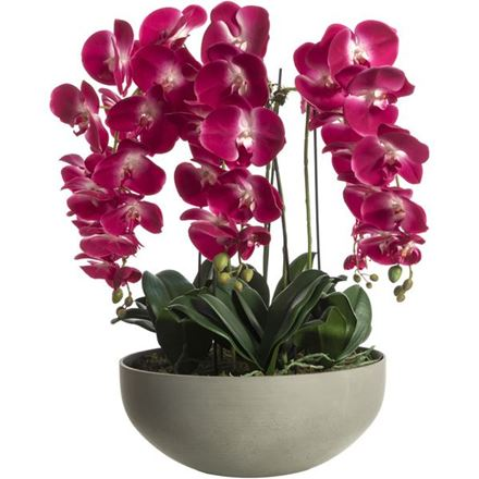 Picture for category Flowers & Plants